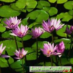 UNIS01, Australia